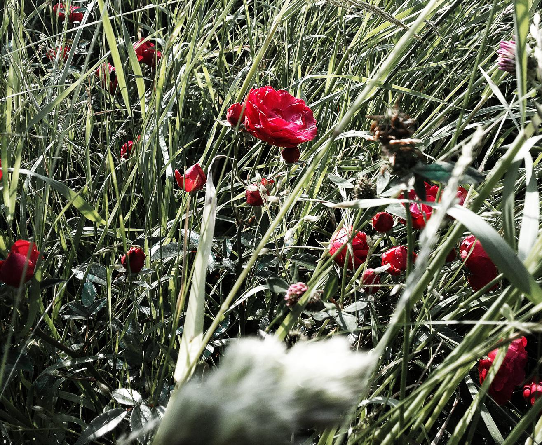 Verwilderter Garten Foto Bild Sonstiges Galerie Natur Bilder