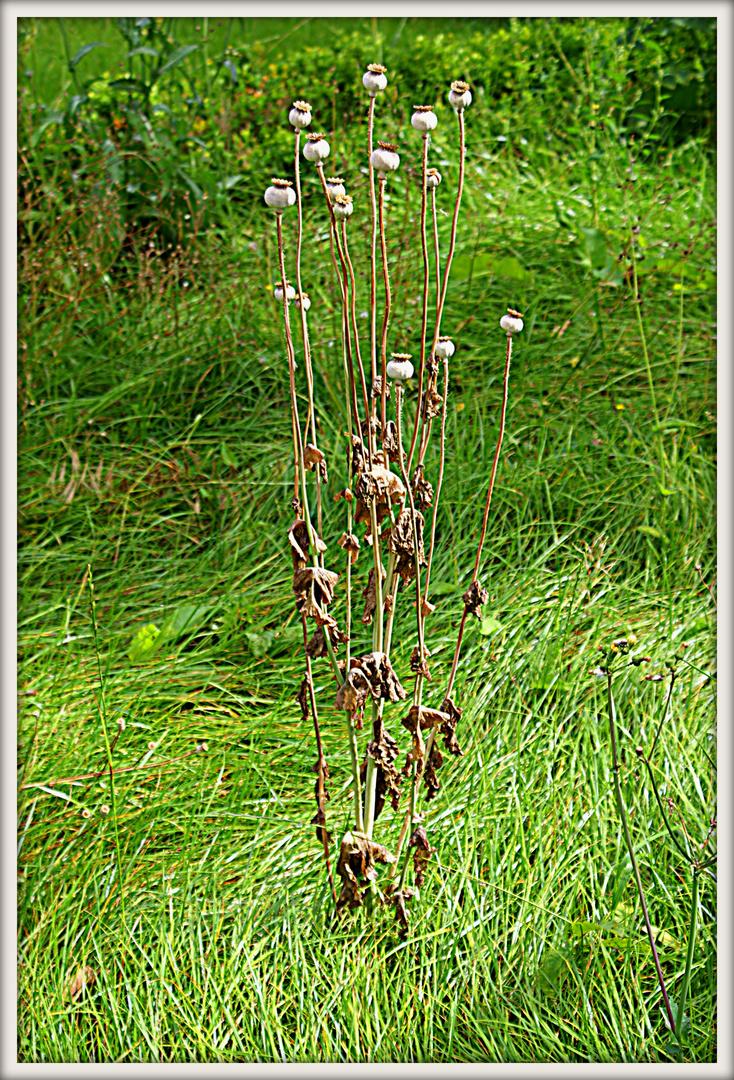 Verwilderter Garten In Rostock 03 Foto Bild Reportage