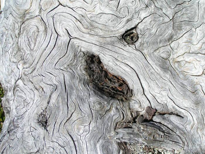 Verwittertes Holz