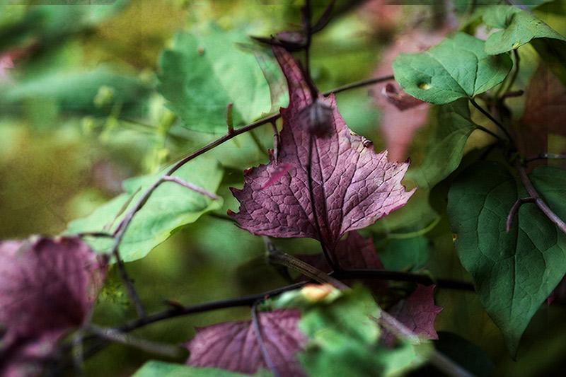 verwunschene Flora