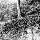 Verwunschener Baum