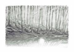 - verwunschener Wald -