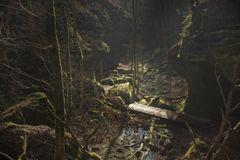 verwunschener Wald....