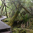 verwunschener Waldweg
