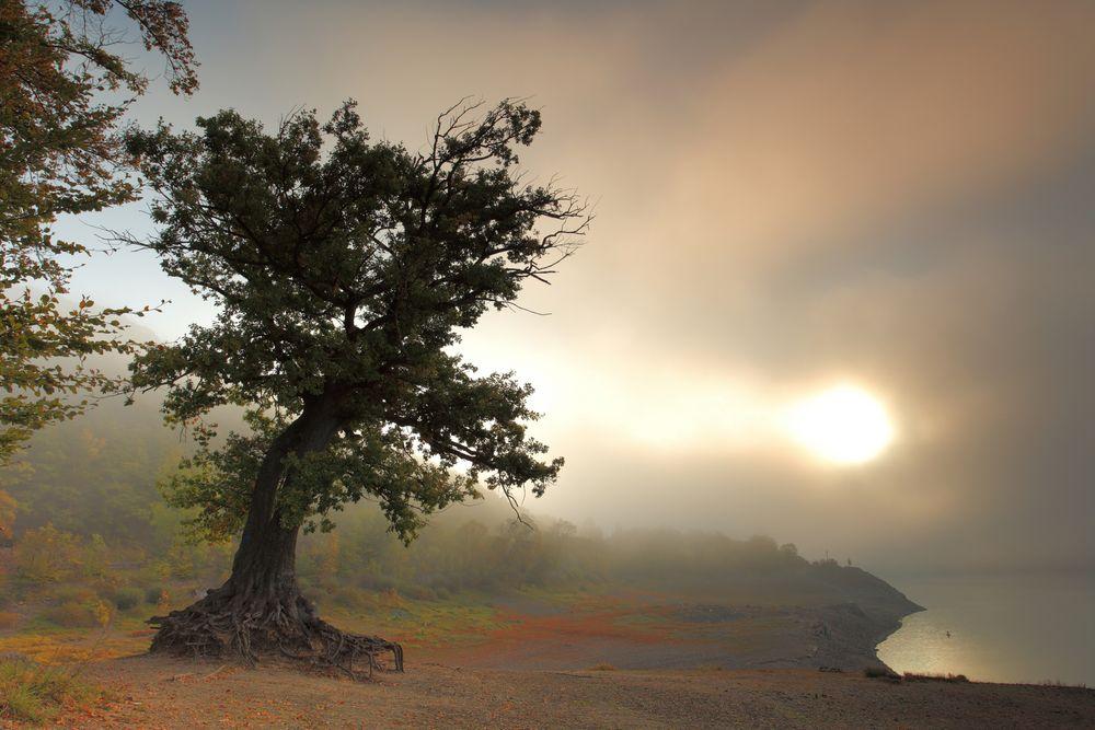 Verwurzelt - Ein Baumphänomen