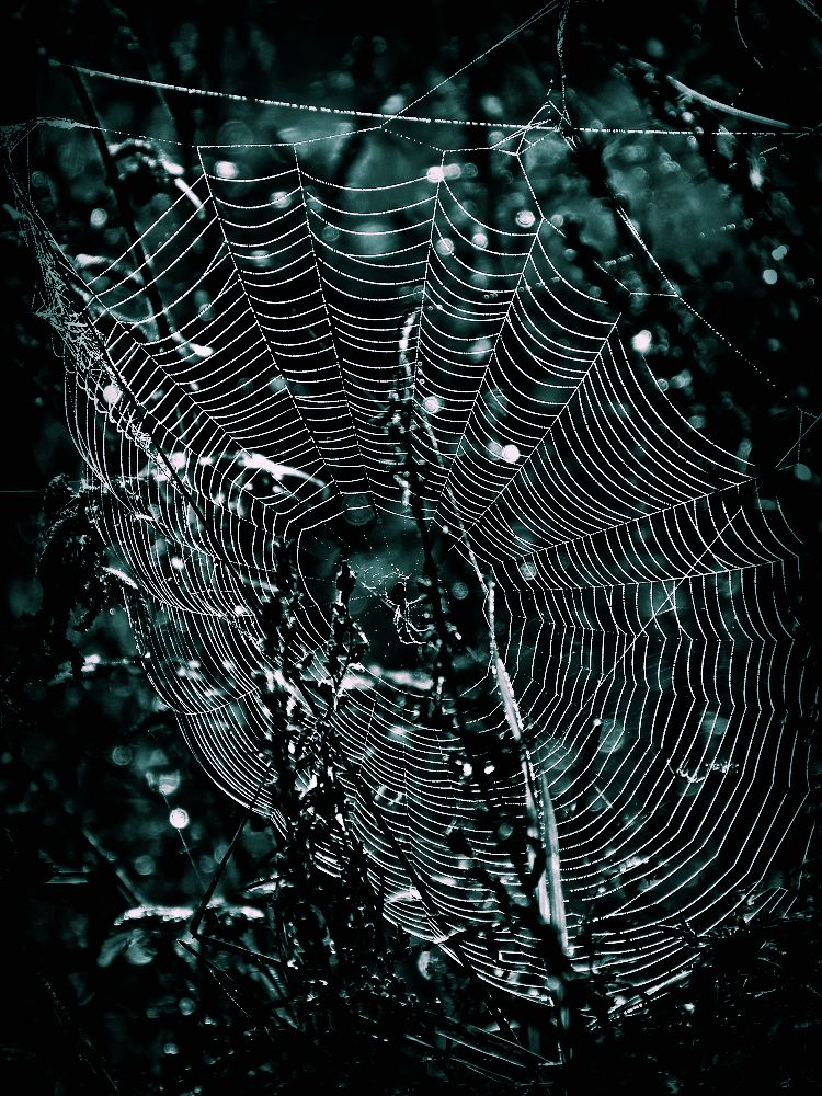 Very large spider web