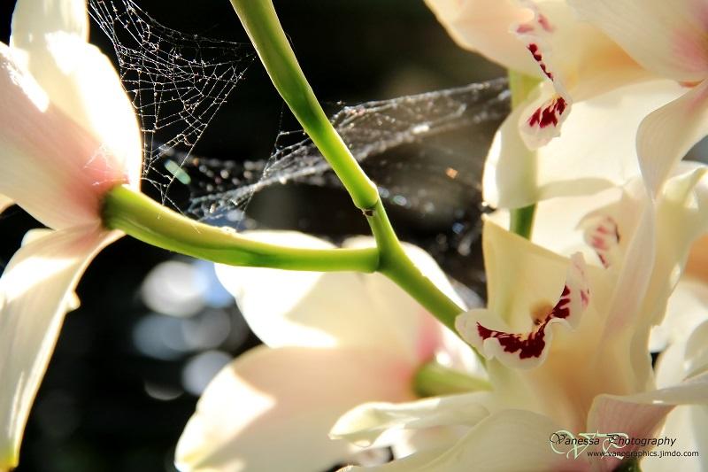 Verzaubertes Spinnennetz