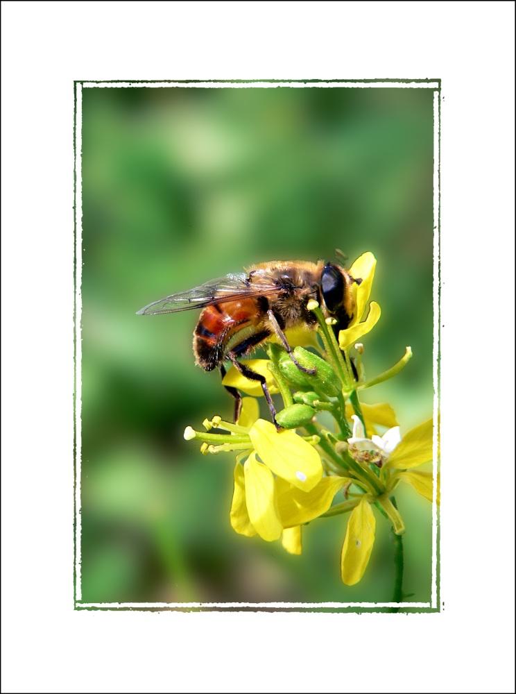 Vespa su fiore giallo