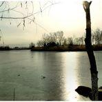 Vestige d'hiver (2)