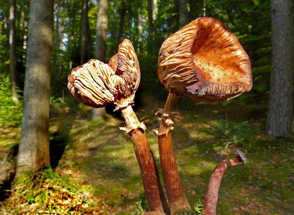 Veteranen im Wald