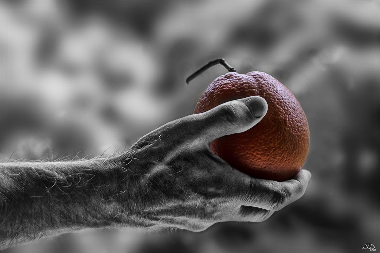 Veux tu une orange ?