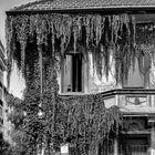 Via Mosè Bianchi, Milano
