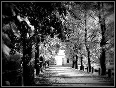 Viale d'autunno...