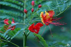 Viñales - Dense végétation