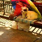 Viata de caine - Hunde leben in Bucharest
