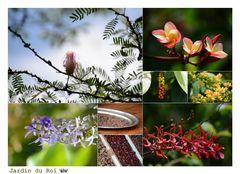 Victoria Botanischer Garten