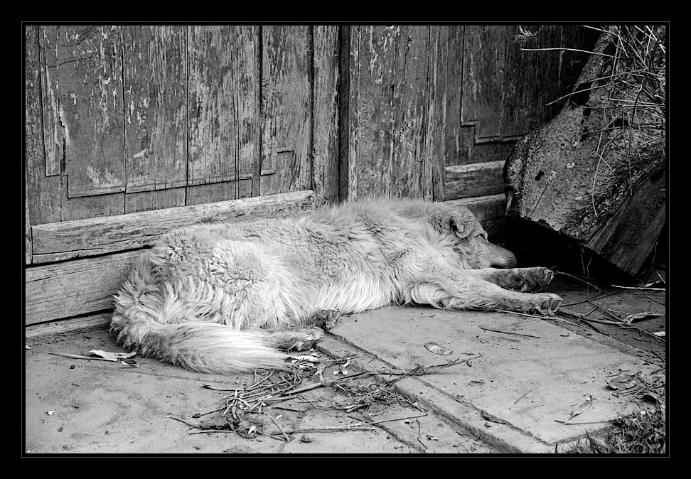 - vida de perro -