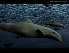 Video Frame - Delfines
