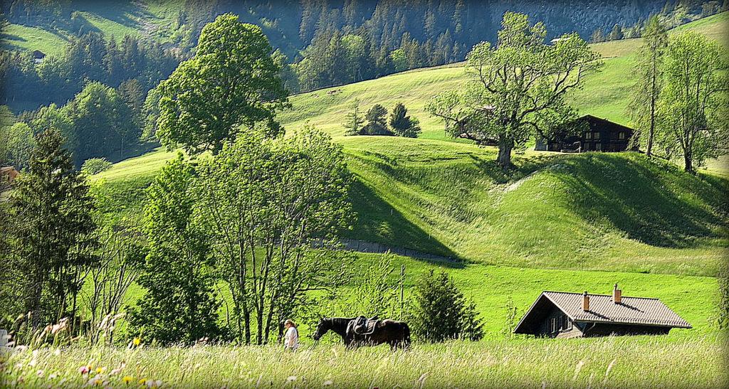 vie paisible à la montagne....