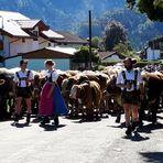 Viehabtrieb durch die Stadt