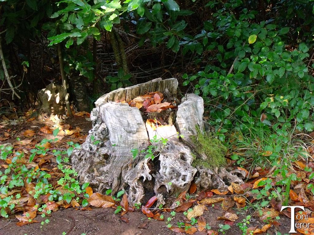 Viejo tronco con hojas secas