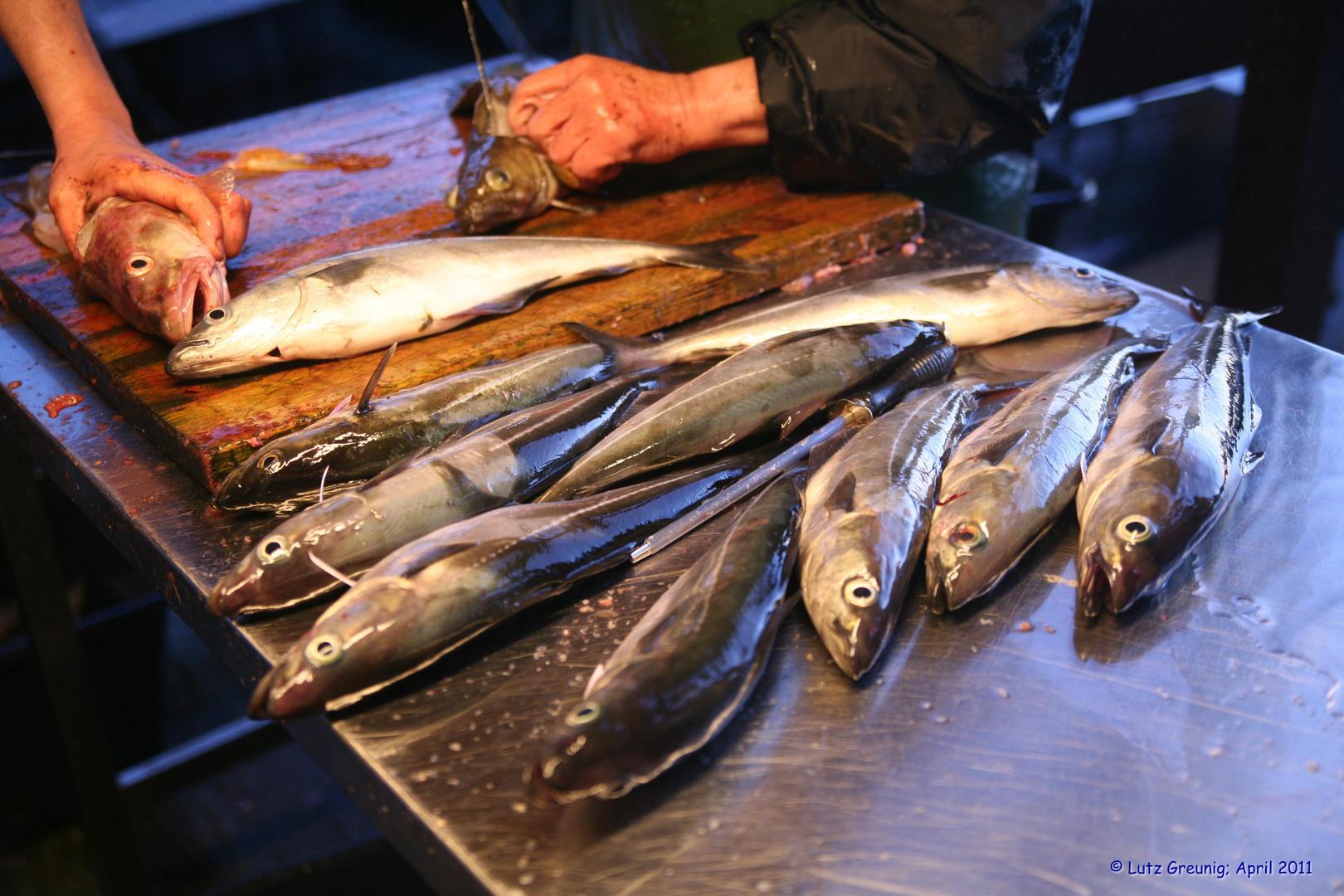 Viel Fisch...
