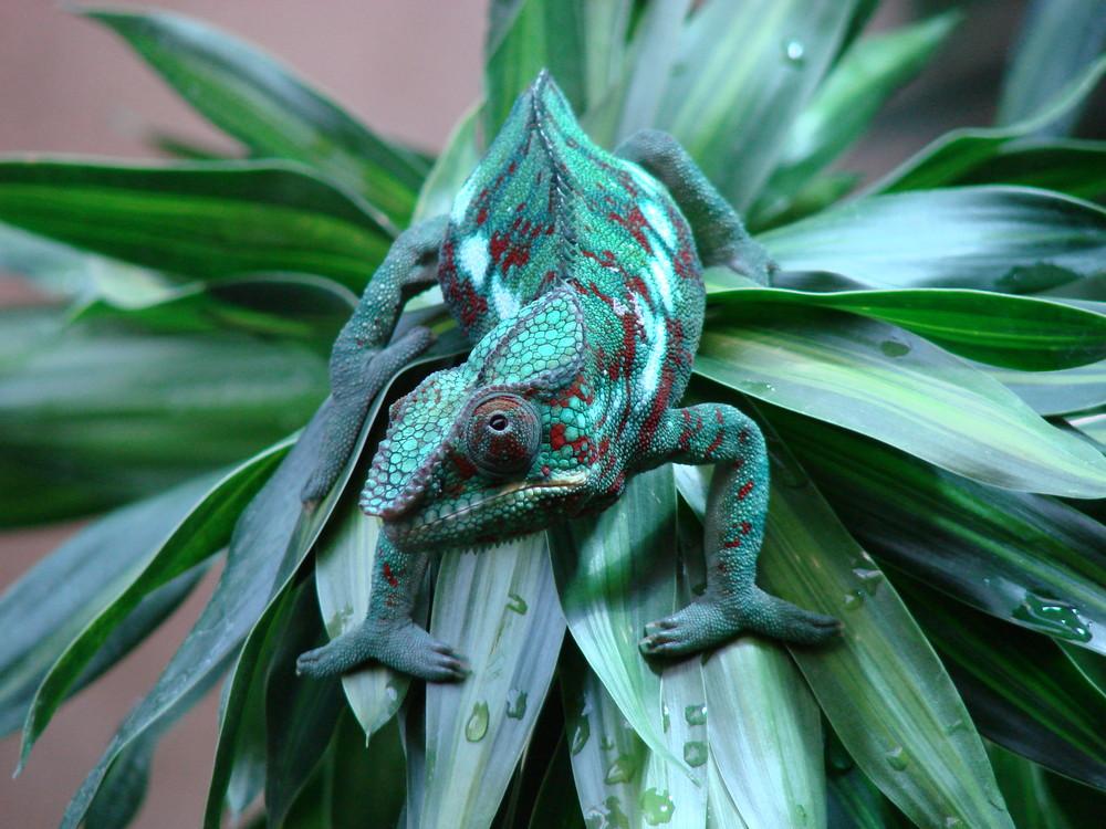 viel grün