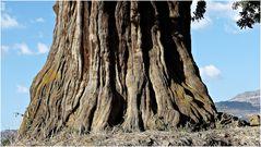 viel Holz.............