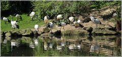 Viel los am Teich