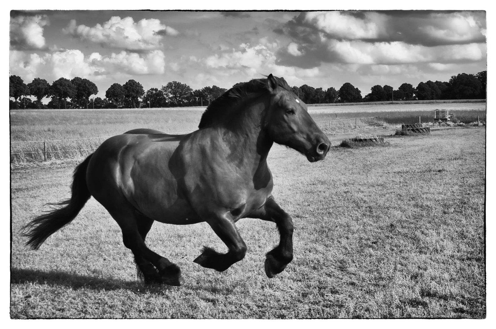 Viel Pferd
