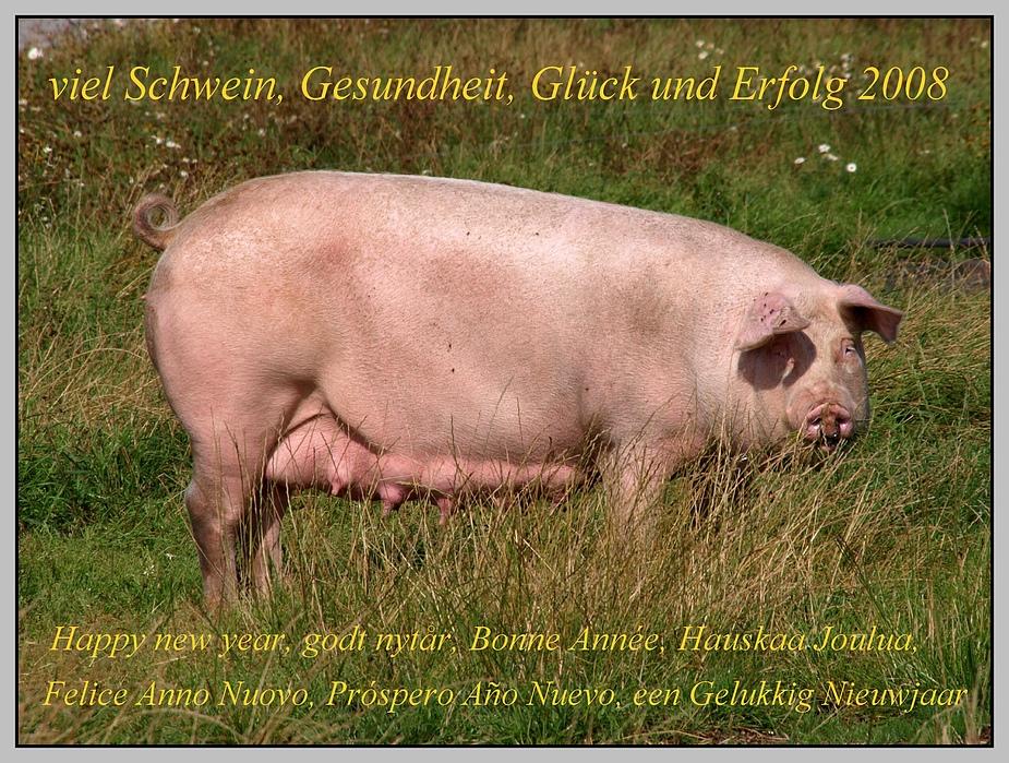 viel Schwein 2008