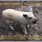 viel Schwein 2009