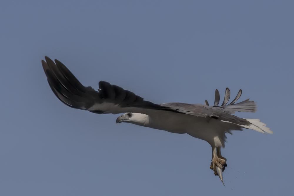 Viel Wind unter den Flügeln
