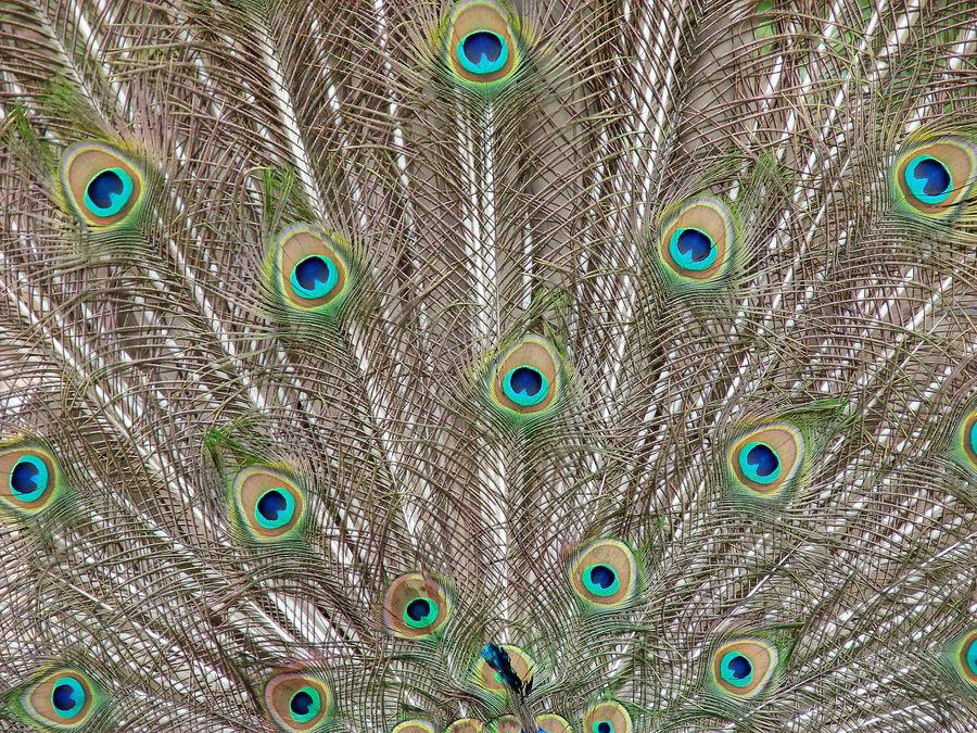 Viele Augen sind auf Beobachtung