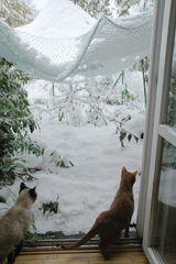 viele Grüße aus dem Schneebedeckten Münsterland...