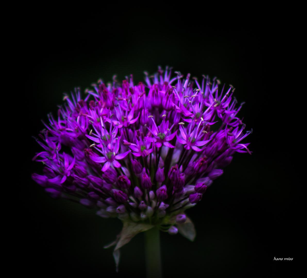 viele kleine Blüten