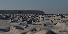 Viele kleine Dünen