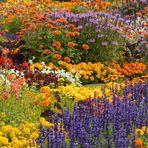 Viele Mittwochsblümchen