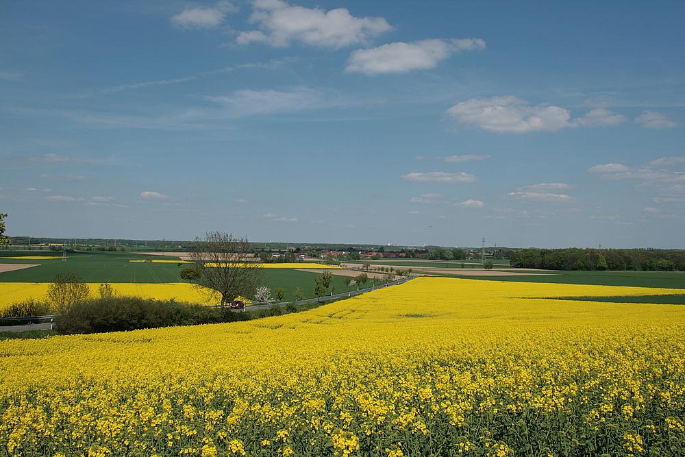 viele viele gelbe Flächen