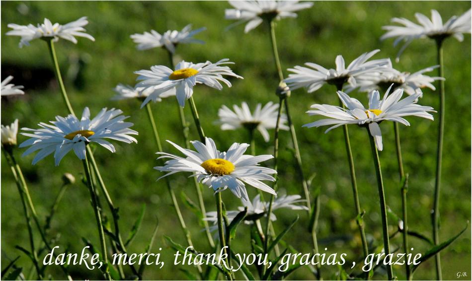 Vielen Dank !