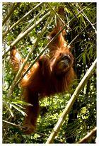 Vielleicht ist es den Affen gar nicht recht, dass wir mit ihnen verwandt sind. (Michael Richter)
