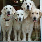 Vier auf einen Streich :-)