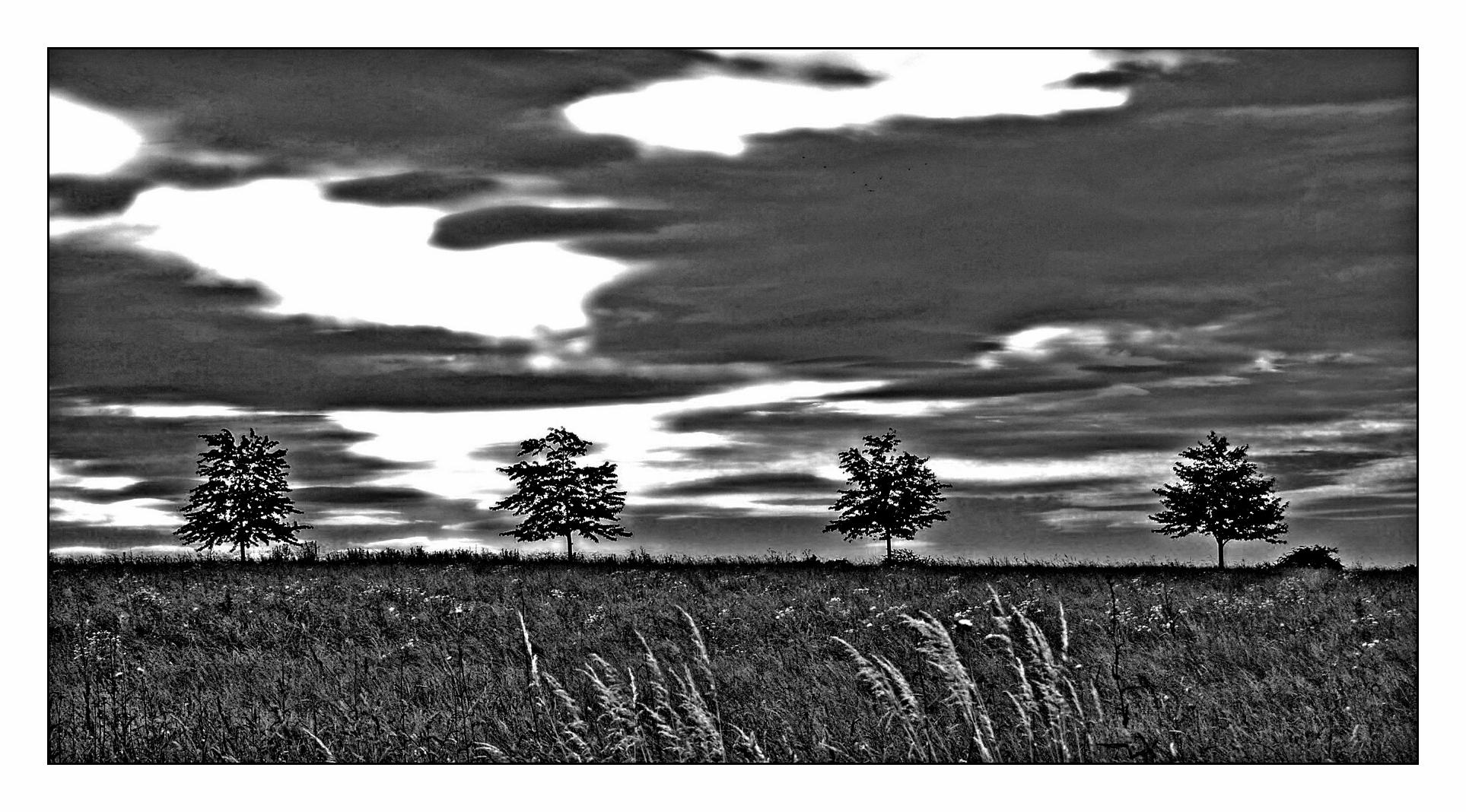 Vier Bäume ...