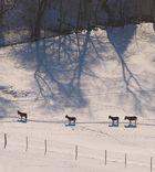 Vier Esel im Schnee ;-)