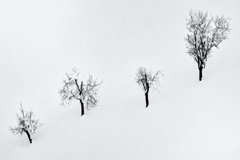 Vier Freunde im Schnee
