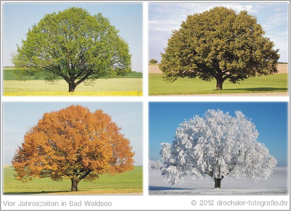 vier jahreszeiten foto bild pflanzen pilze flechten b ume einzelb ume bilder auf