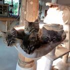 Vier Katzenkinder