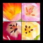 Vier Tulpen