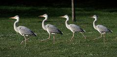 Vierlinge beim Osterspaziergang