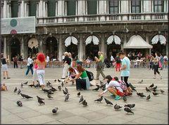 Vietato nutrire i colombi a Piazza San Marco...per Jurgen Divina.